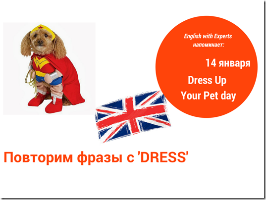 Dress up phrases idioms dress up your pet